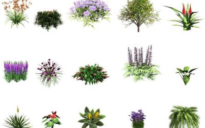 Plant database is always growing!
