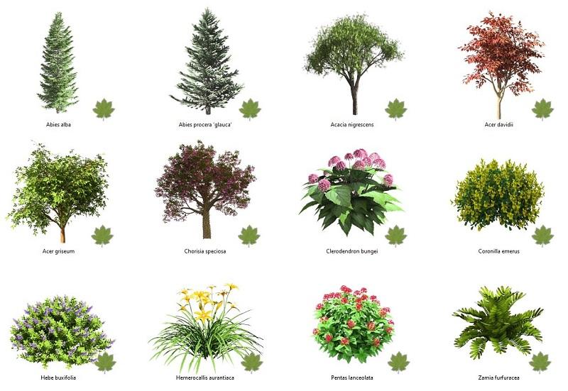 Nuevas plantas disponibles en la base de datos de plantas de Lands Design
