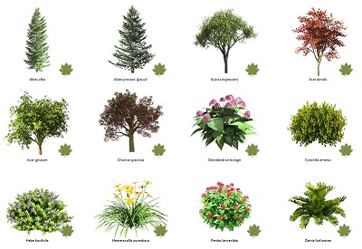 The new plant editor generates amazing plant displays!